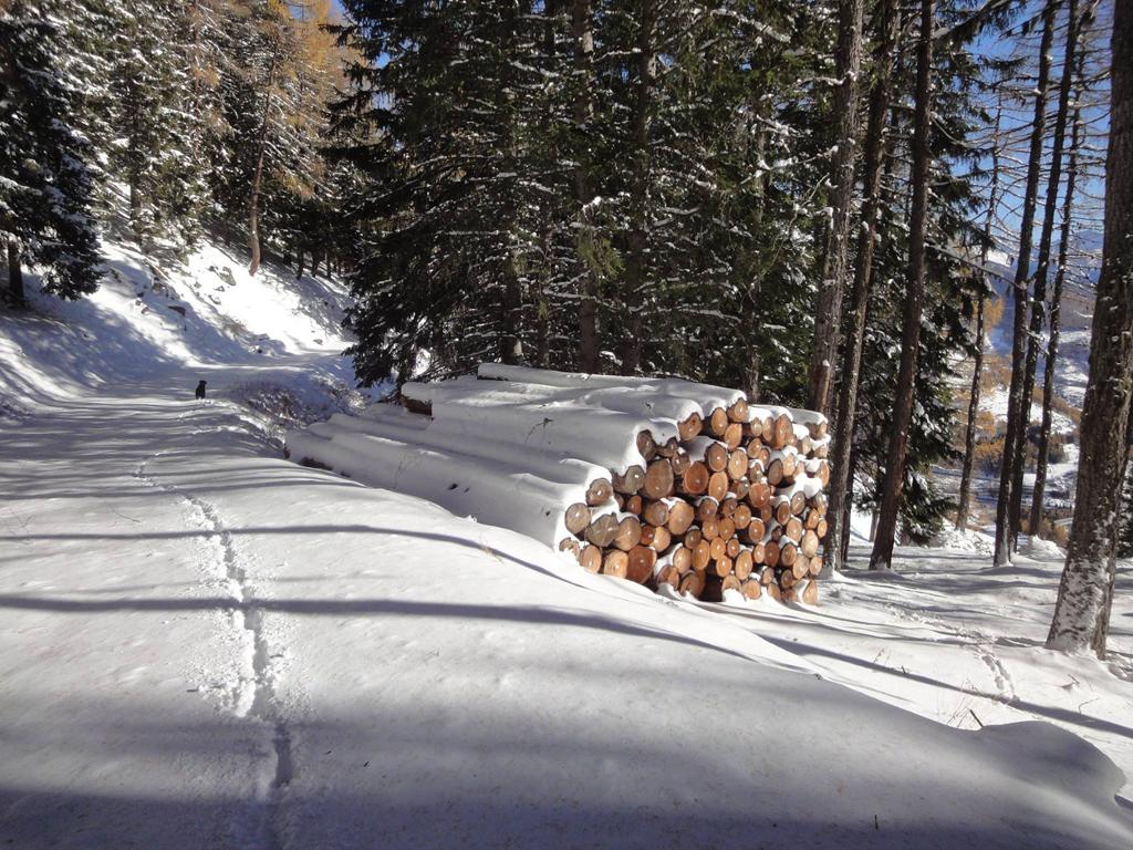 bosco, ciaspole, Crevacol, senza sci