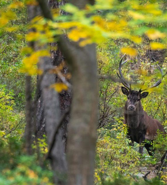Cervo valle d'Aosta DSC_1415
